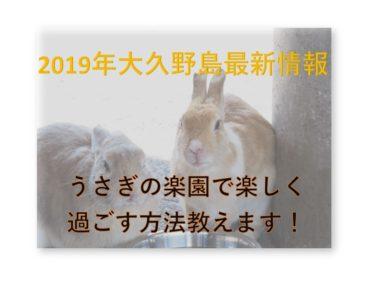 【うさぎの楽園】大久野島でウサギと楽しく遊ぶコツを教えます!【2019年版】