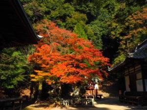 西山興隆寺20191116-3