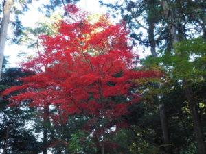 西山興隆寺20191130-3