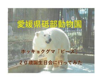 【砥部動物園】ホッキョクグマのピース、20歳誕生会に行ってみた