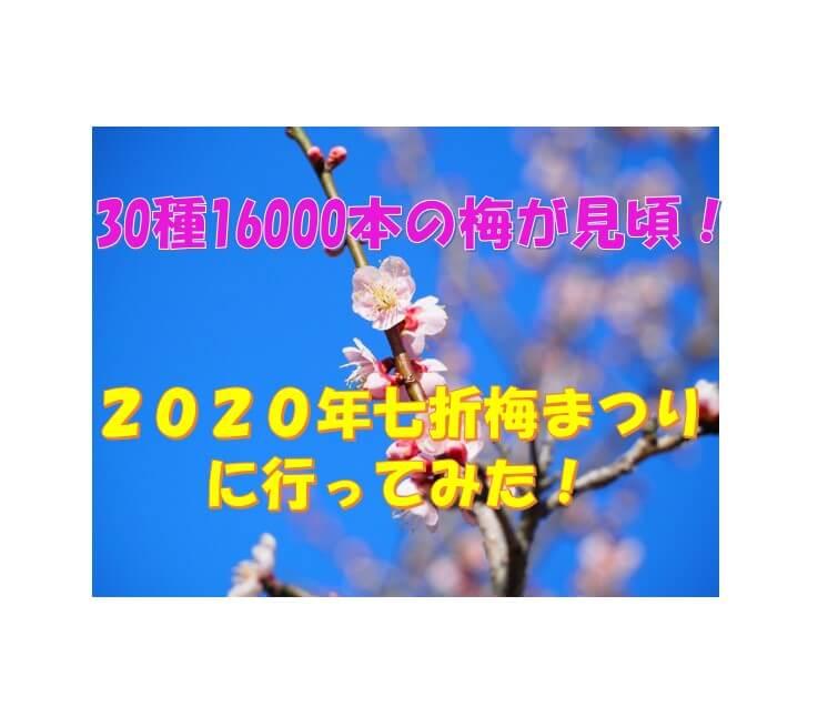 2020七折梅まつり