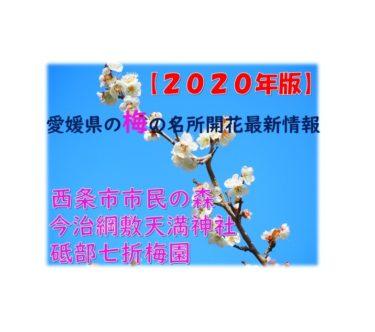 【2020年版】愛媛県梅の名所の最新情報【西条市民の森・今治綱敷天満神社・砥部七折梅園】