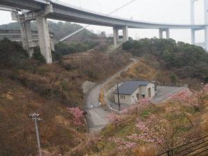 サンライズ糸山の河津桜