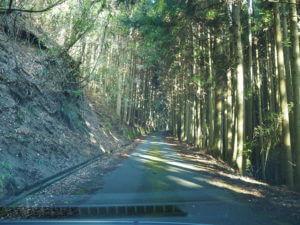 高縄山への道