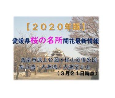 2020年愛媛県桜の名所開花最新情報