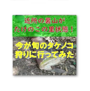 【旬は春でも季語は夏】近所の裏山がタケノコの里状態!炒めてもご飯にしても美味しい!