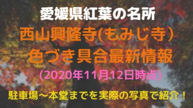 【2020年11月12日時点】愛媛県西条市西山興隆寺(もみじ寺)の紅葉最新情報一覧まとめ【色づき具合、見ごろ】
