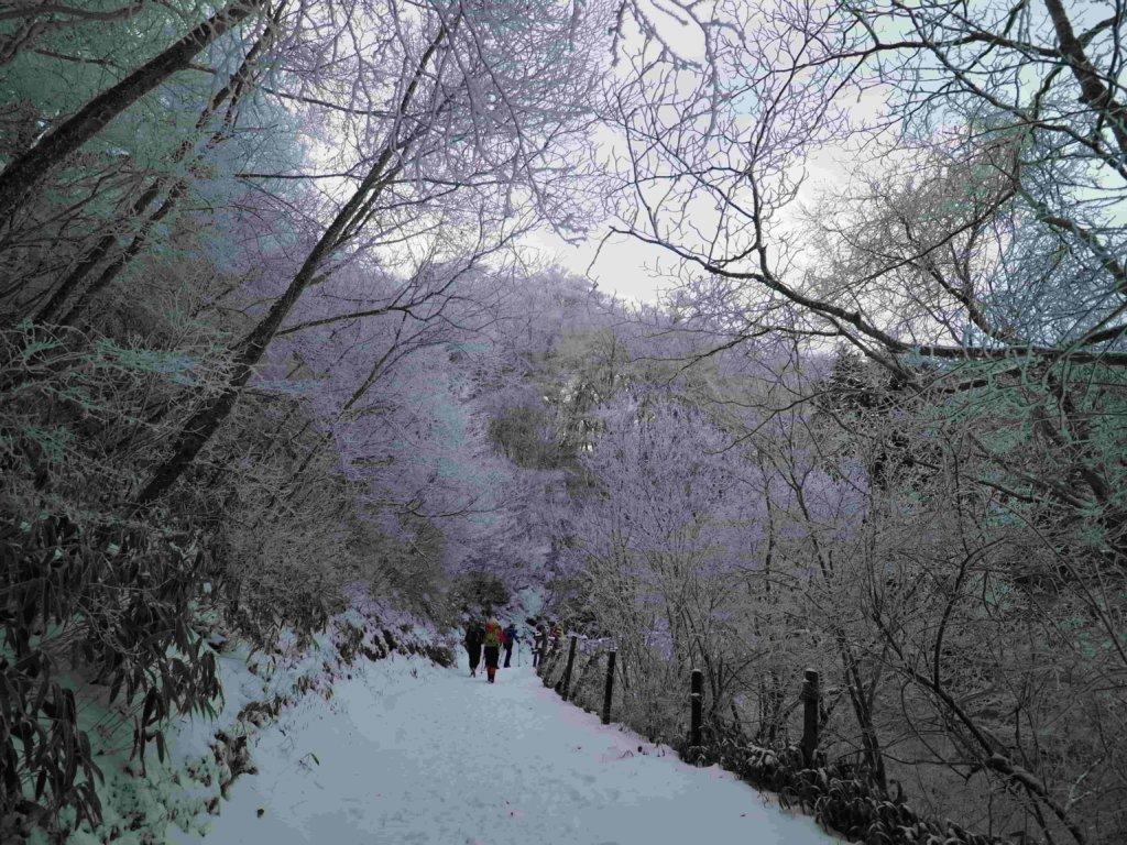 石鎚山へ霧氷を見に行こう