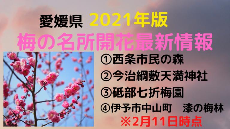 2021年愛媛の梅開花状況