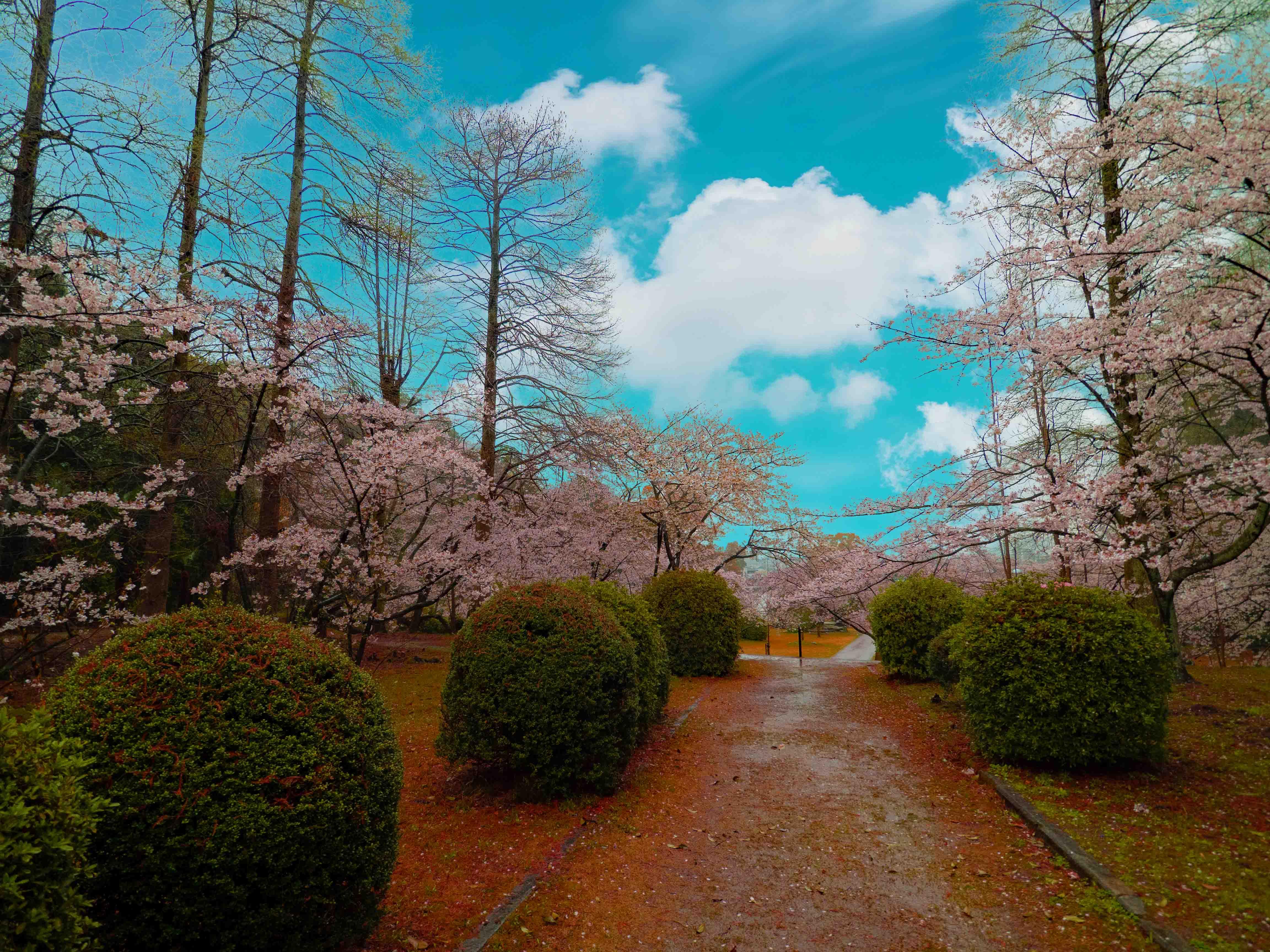 新居浜市「滝の宮公園」