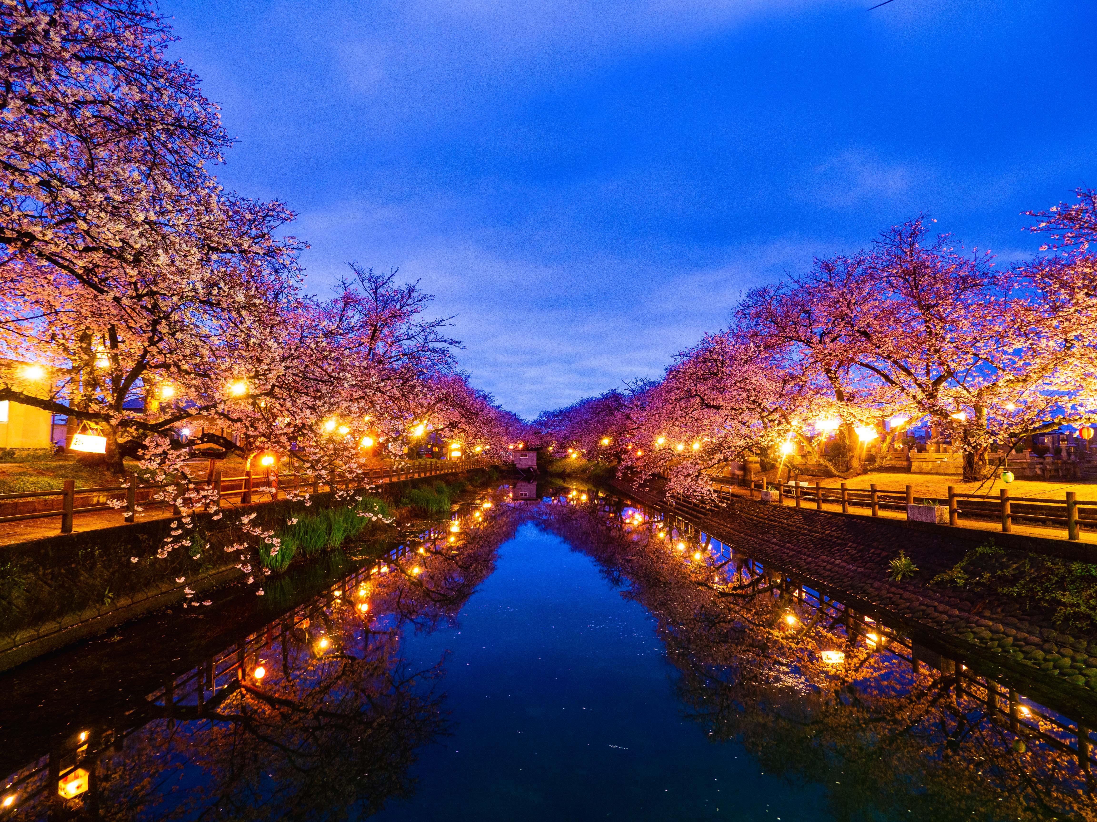 西条市「ひょうたん池」の夜桜