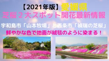 【2021年版】愛媛県、芝桜名所2か所の開花最新情報一覧まとめ【西条禎瑞、宇和島山本牧場】