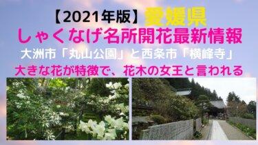 【2021年版】愛媛県、シャクナゲの名所スポット2か所の開花最新情報一覧【大洲丸山公園、西条横峰寺】