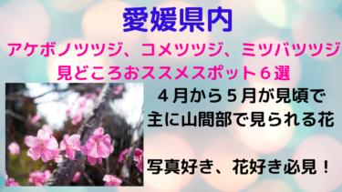 愛媛県のアケボノツツジ見どころスポット