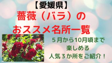愛媛県のバラの名所