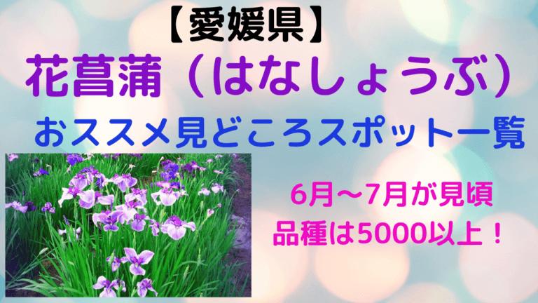 愛媛県の花菖蒲スポット